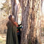 2006-11-november-092-dryad-pays-homage-to-her-tree-3