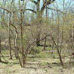2007-05-may-115-small-grove